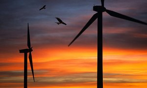 Red kites fly past wind turbines. Photograph: Alamy